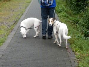 Zina und Feli auf der  - Halde Hoheward