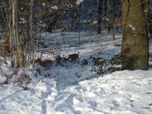 Cooki und Elli toben im Schnee, Erbe unserer Cooki