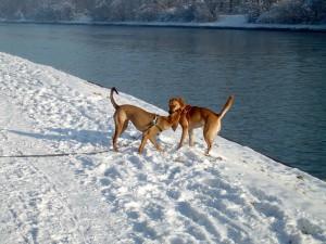 Cooki und Elli messen sich im Schnee, Erbe unserer Cooki