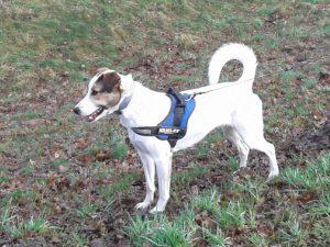 Feli, Hund mit eigener Geschichte
