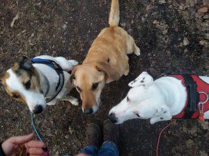 Feli, Elli, Zina, Hund mit eigener Geschichte